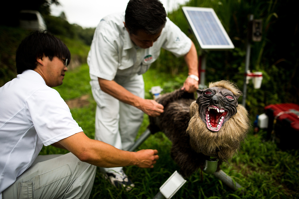 "CHIBA, JAPAN - AUGUST 10:  Members of JA Kisarazu-shi, shows a robot named ""Super Monster Wolf"" a solar powered robot designed to scare away wild animals from farmer's crops in Kisarazu, southwestern Chiba Prefecture, Japan on August 10, 2017. (Photo by Richard Atrero de Guzman/AFLO)"