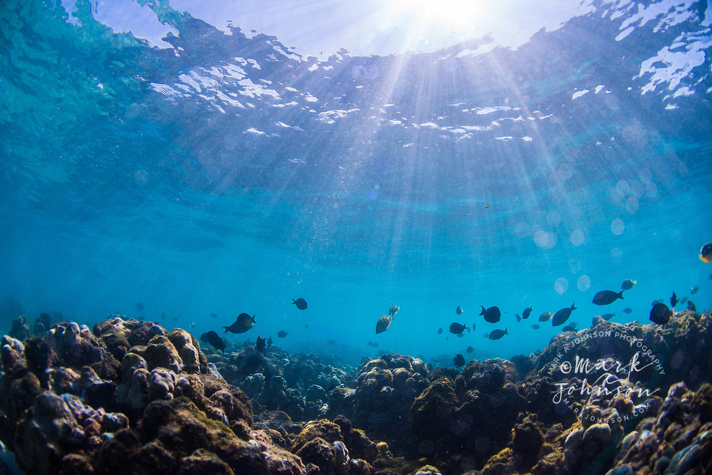 Underwater coral reef scene, Puako Bay, Big Island (Hawaii Island), Hawaii