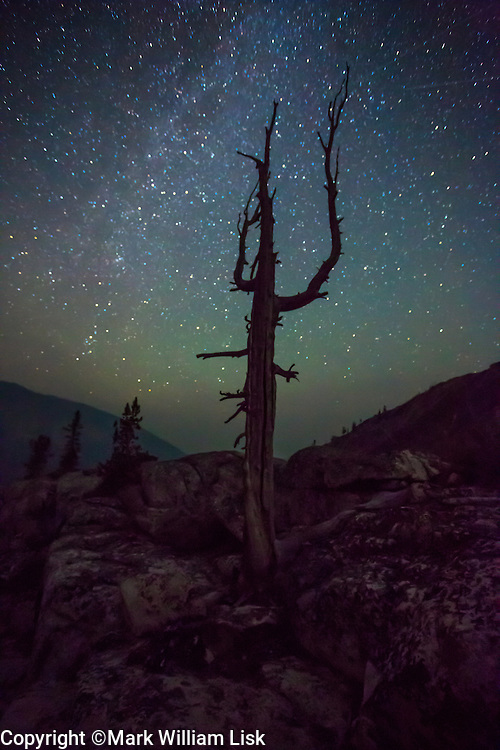 A White Pine skeleton sihouettes against a star filled sky in the White Cloud Wilderness.