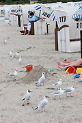 Timmendorfer Strand. Beach baskets and seagulls.