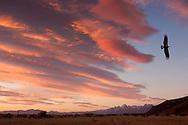 Fitz Roy area, Mountain, Parque Nacional Los Glaciares, El Chalten, Santa Cruz, Patagonia, Argentina