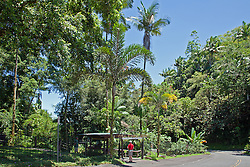 Entrance to the Hawaiian Tropical Botanical Garden, on scenic loop off Highway 19, north of Hilo.