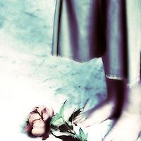 rose at girls feet