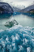Sapphire Blue Icebergs in Tracy Arm Fjord Alaska