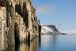 Bird cliff with Thick-billed Murre (Uria lomvia) in Spitsbergen, Svalbard