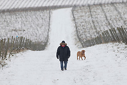 © Licensed to London News Pictures. 18/03/2018. Dorking, UK. A man walks his dog amongst the snow covered vines at Denbies Vineyard after overnight snow and freezing temperatures. Amber weather warnings remain in place for parts of the UK for a second day. Photo credit: Peter Macdiarmid/LNP