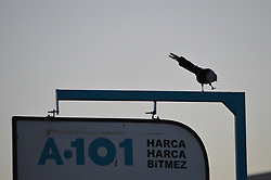 July 13, 2017 - Ankara, Turkey - A crow is seen on a signboard during the sunrise in summer in Ankara, Turkey on July 13, 2017. (Credit Image: © Altan Gocher/NurPhoto via ZUMA Press)