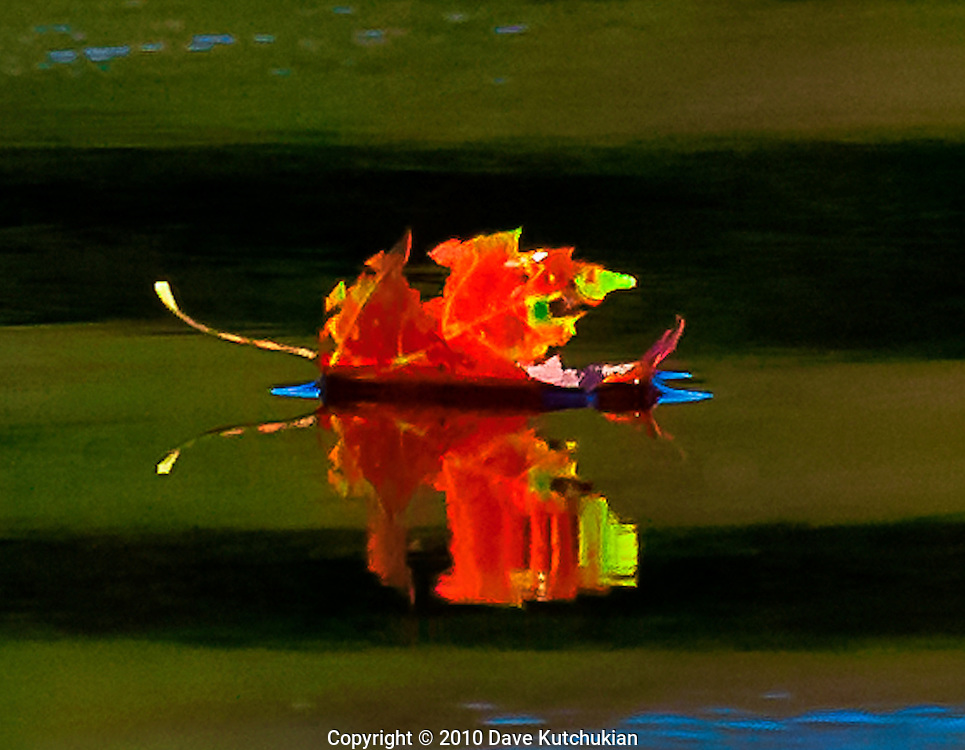 A single maple leaf floats on the pond,having performed its assigned duty, the last hurrah!