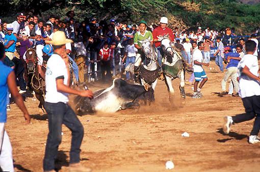 Toros coleados, Carora, Estado Lara, Venezuela