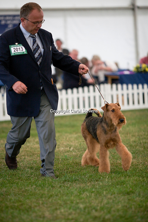Ch Katerinas Land Spicy Cherry At Saredon<br />
