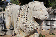 Lion statue, 2nd century AD, at the Temple of Apollo, 4th century BC, Didyma, Aydin, Turkey. Didyma was an ancient Greek sanctuary on the coast of Ionia near Miletus, consisting of a temple complex and the oracle of Apollo, or Didymaion, who was visited by pilgrims from across the Greek world. The earliest temple ruins found here date to the 8th century BC but Didyma's heyday lasted throughout the Hellenistic age. It was approached along a 17km Sacred Way from Miletus and is the largest sanctuary in Western Turkey. Picture by Manuel Cohen