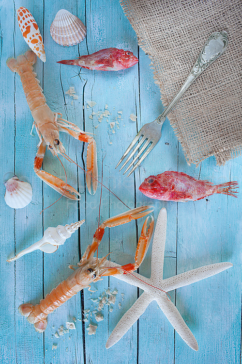 Concept of sea on the table: raw lobsters, scorpionfish and seashells on blue wooden background.