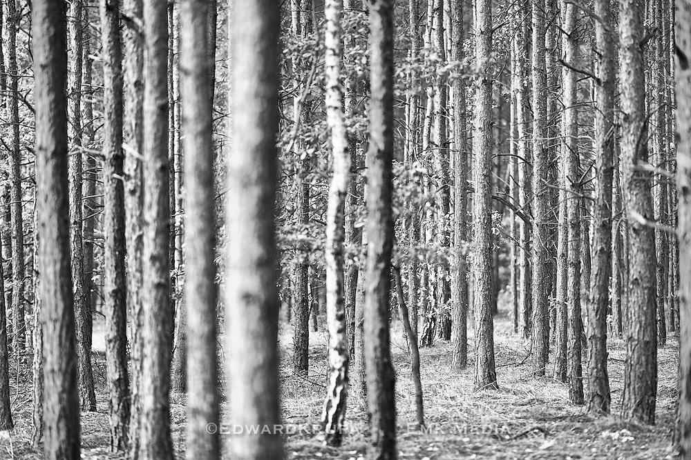Zagan Pines 2