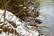 David Page fly fishes for winter steelhead. Gold River, Vancouver Island, BC