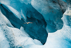 Northern Fulmar (Fulmarus glacialis) in front of glacier ice in Svalbard, Norway