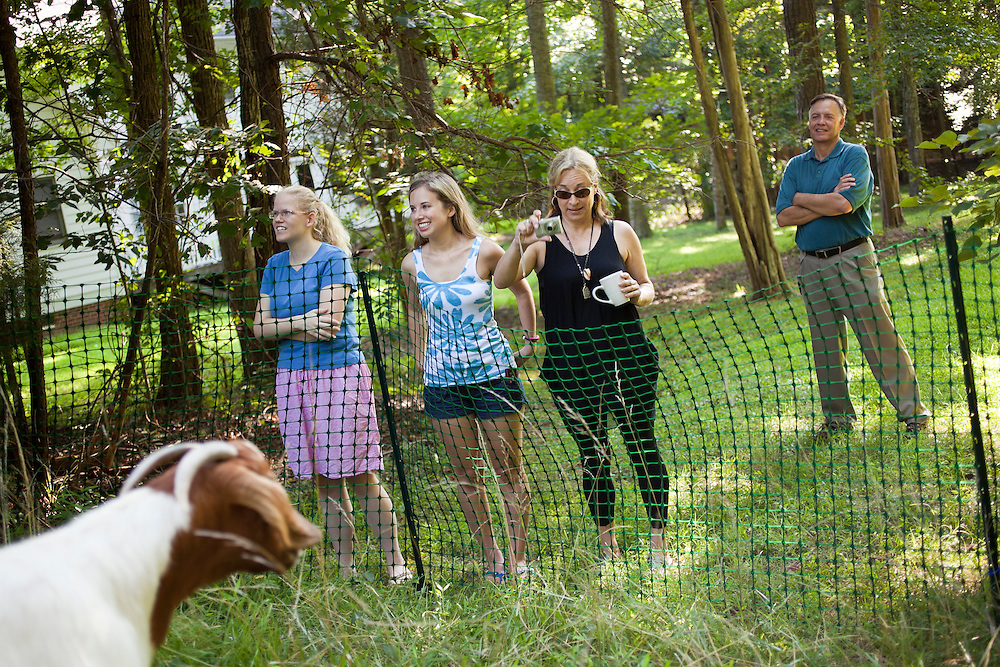 Neighbor Shirley Law, far left, and Kristin Laveille, middle left, watch a herd of goats graze in the lot-side easement of homeowner Steve Holdaway, far right, as Megan Laveille, middle right, takes a picture in Chapel Hill, N.C., Thurs., July 22, 2010. ..D.L. Anderson for The Wall Street Journal..GOATS