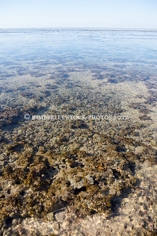 Algae and coral lie in shallow water on the reef at Adele Island off the Kimberley coast.