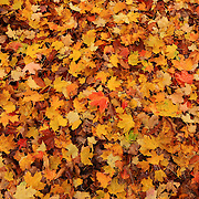 """Rain Drops on Autumn""<br />