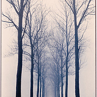Lane with bare trees disappearing into mist.
