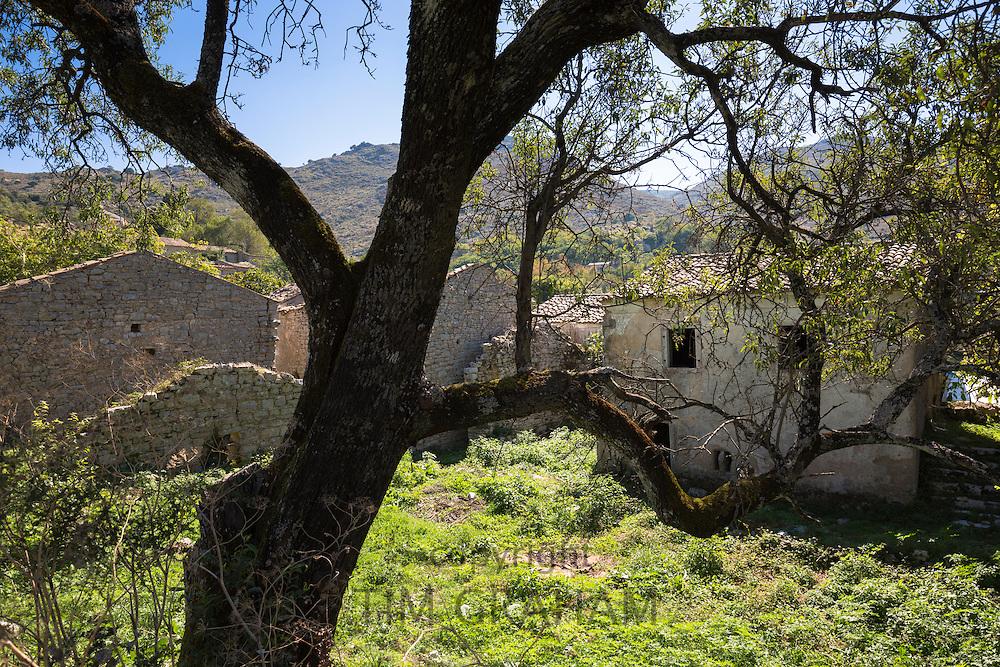 Derelict houses ruins and olive tree in ancient mountain village of Old Perithia - Palea Peritheia, Northern Corfu, Greece