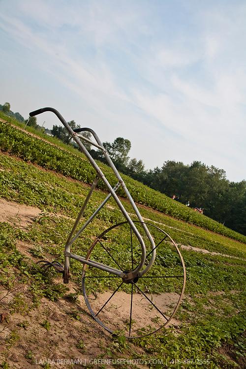Wheeled cultivator in a farm field