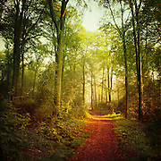Light in the still green forest on an October morning.<br /> <br /> Morgenlicht im Mirker Hain, Wuppertal.<br /> <br /> Prints &amp; more: http://society6.com/product/October-Forest_Print