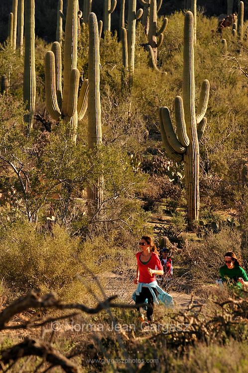 Runners and cyclists race on Bajada Loop Drive in Saguaro National Park West, Sonoran Desert, Tucson, Arizona, USA.