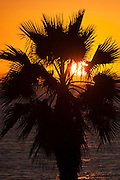 Sunset silhouette behind a palm tree in San Clemente, CA