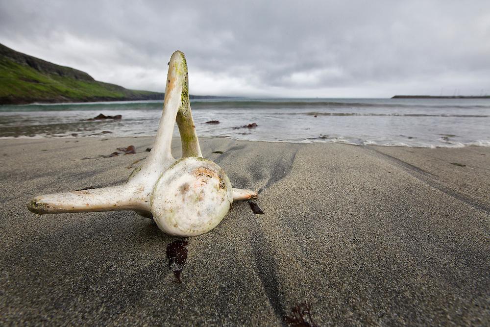 Sandoy Island, Faroe Islands.<br /> <br /> A pilot whale vertebrae sits on a grindadr&aacute;p killing beach.