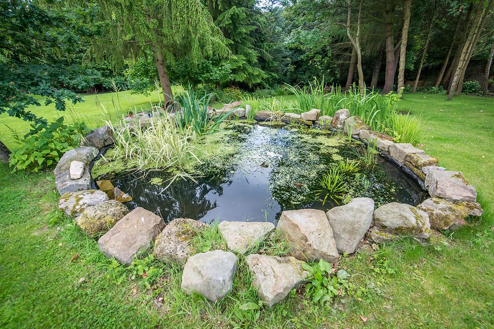 Aquatic vegetation flourishes in garden pond, Richmond, Yorkshire, England