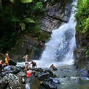 Jungle Waterfall, El Yunque, Puerto Rico