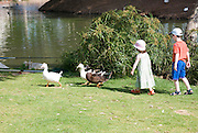 2 ducks being followed by 2 children boy aged 5 and girl aged 3 Model release available
