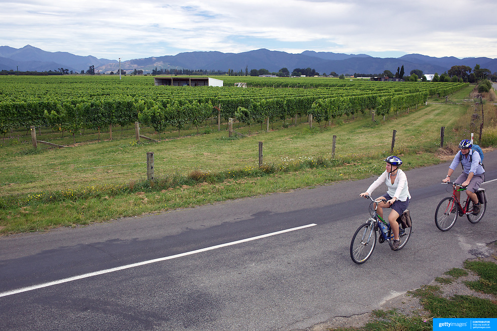 Cyclists make their way around the vineyards of the Marlborough Wine Region, with Wine Tours by Bike. Marlborough has over 40 wineries within a 10km radius of Blenheim. Marlborough is New Zealand's most important and largest wine area and is world famous for its Sauvignon Blanc. Marlborough. New Zealand. 13th February 2011.  Photo Tim Clayton