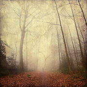 Forest shrouded in fog with solitary person walking into the fog<br /> <br /> Prints &amp; more:http://society6.com/DirkWuestenhagenImagery/fog-trail_Print