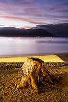 Tronco de árvore cortada na Praia do Ribeirão da Ilha. Florianópolis, Santa Catarina, Brasil. / Tree stump at Ribeirao da Ilha Beach. Florianopolis, Santa Catarina, Brazil.