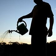 Bolivia. Loma Suarez. watering his tomato plants on the camellones of Loma Suarez
