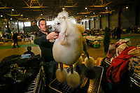 A man prepares his Poddle at the 50th Euro Dog Show in Kortrijk, Belgium, 16 November 2013.