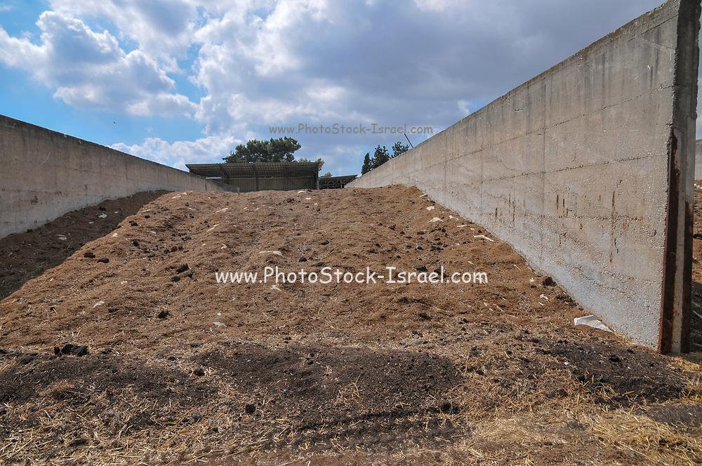 Israel, Galilee, Kibbutz Harduf, The dairy cowshed, silage storage silo