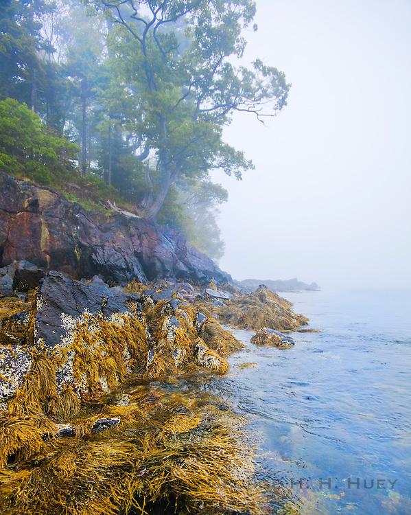 0902-1012 ~ Copyright: George H.H. Huey ~ Curtis Island in fog.  Camden Harbor. Penobscot Bay, Maine