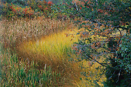 Fall color reveals the diversity of plant life in a Black Hills wetland.  Black Hills Wild Horse Sanctuary, South Dakota.