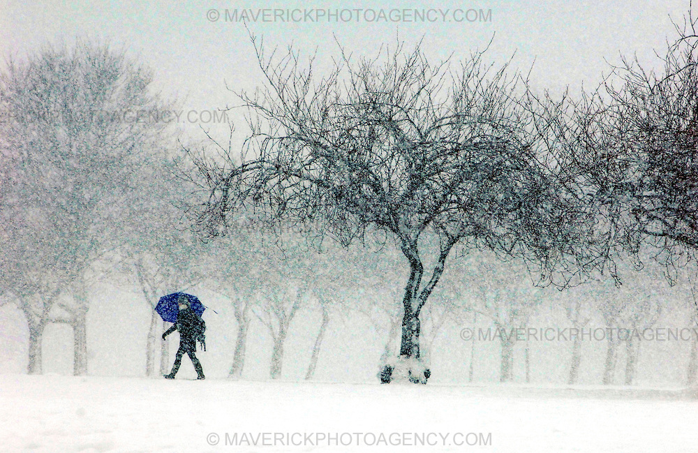 EDINBURGH, UK - 2nd December 2010: Heavy snow continued to fall through out the day in Edinburgh today. ..Heavy snow has fallen across large parts of the UK, disrupting travel.  Weather warnings of heavy and drifting snow are also in place for many places across the UK...Picture shows a person walks through the Meadows in Edinburgh during a heavy snow storm. ..(Photograph: Richard Scott/MAVERICK)