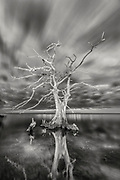 B&W cypress tree photograph with a long exposure to show the clouds moving on the Outer Banks of NC.
