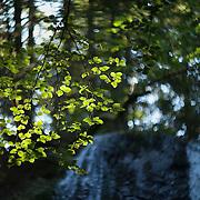 Nature Photo Portal