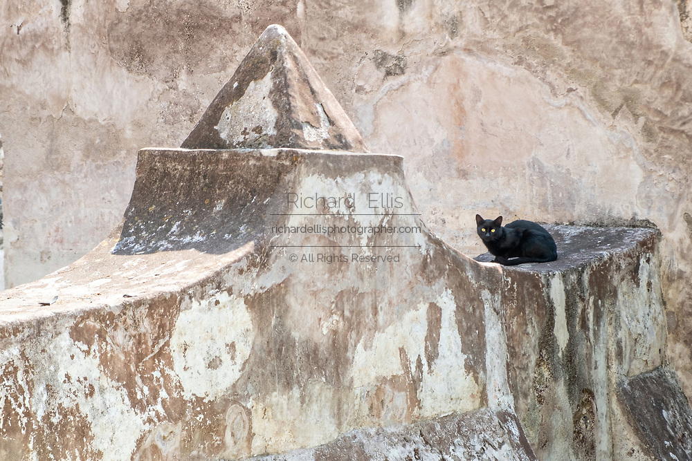 A black cat on a stone wall at the San Nicolas Tolentino Temple and Ex-Monastery in Actopan, Hidalgo, Mexico. The colonial church and convent  was built in 1546 and combine architectural elements from the romantic, gothic and renaissance periods.