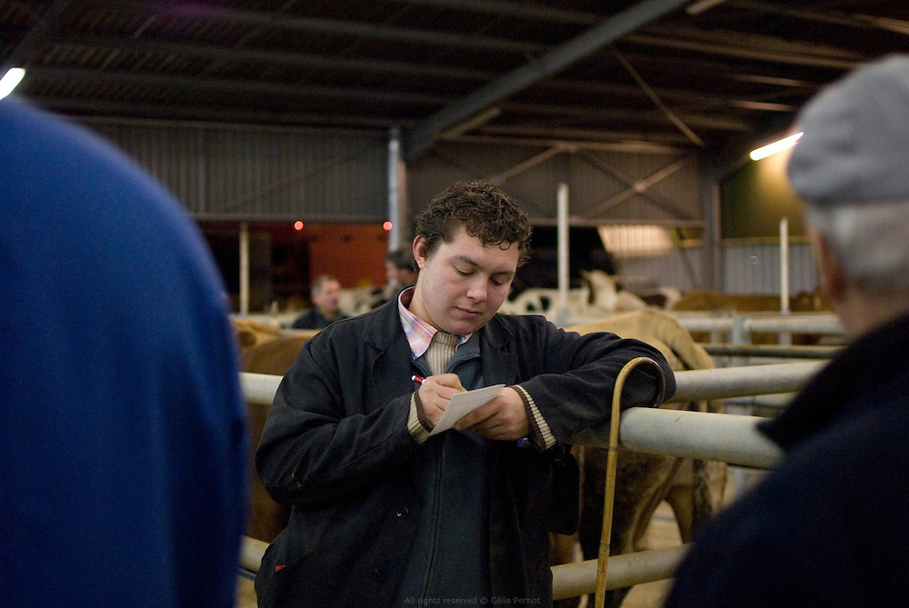 Marché aux bestiaux de Lezay, Poitou-Charentes, le mardi de 5h30 à 9h30. Deuxième marché national de France. Vente principalement destinée à l'Espagne et à l'Italie. Automne 2010.