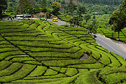 Malabar thee plantages in de hooglanden van West Bandung op het Indonesische eiland Java. De Malabar thee plantages liggen in het Parahyangan gebied. De Parahyangan wordt ook wel de Preanger genoemd in voormalig Nederlands Indie.