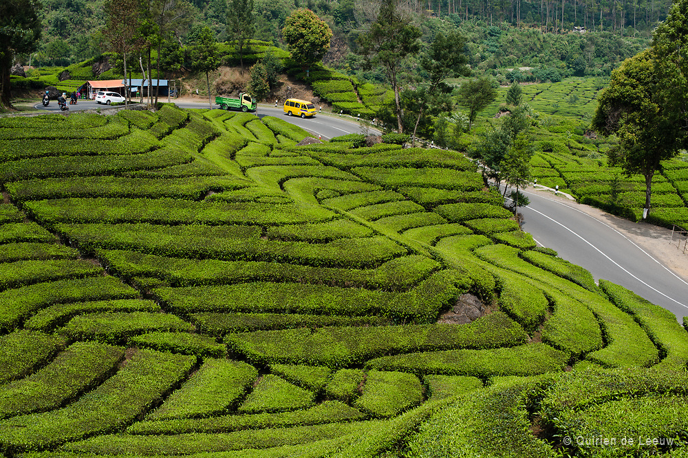 Malabar tea plantations in the highlands of West Bandung on the Indonesian island of Java. The Malabar tea plantations are located in the Parahyangan area.<br />