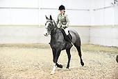 Class 17 - Ridden Hunter & Ridden Small Hunter