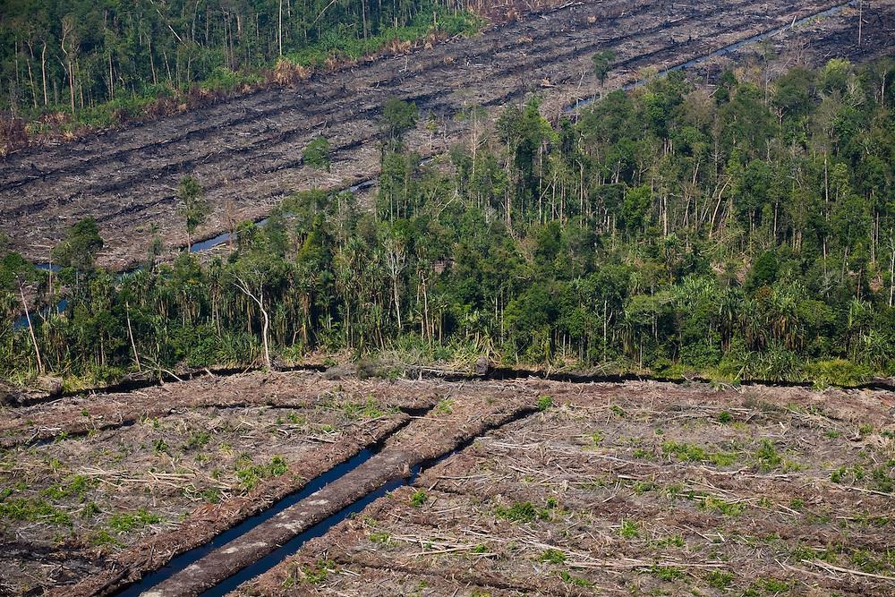 Logged areas south of Dayun, Sumatra, Indonesia, Aug. 30, 2008..Daniel Beltra/Greenpeace