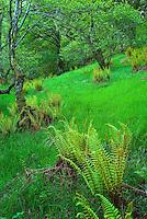 Forest in Glen Coe Scotland